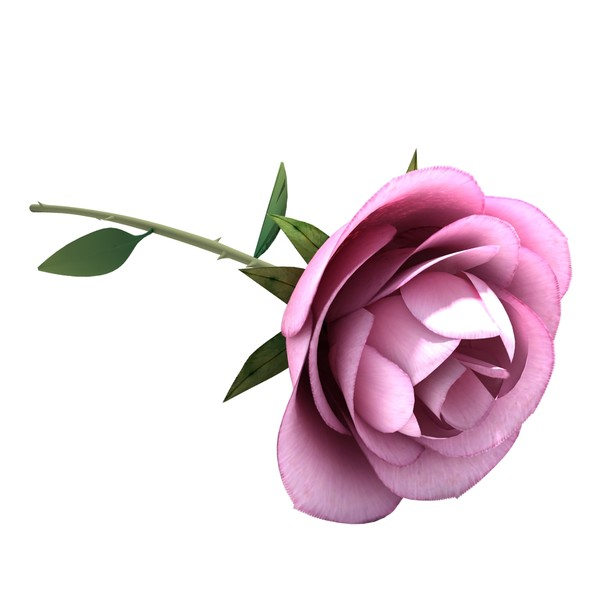 3D clipart rose Best max BBCpersian7 max rose