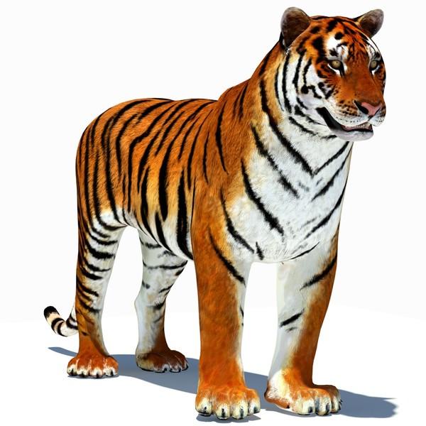 3D clipart tiger Of 3d clipart tiger
