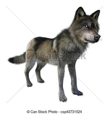 3D clipart wolf 3D Gray Wolf Rendering Wolf