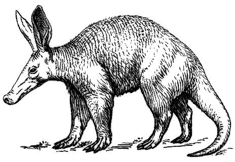 Aardvark clipart Domain Aardvark Aardvark Clipart page