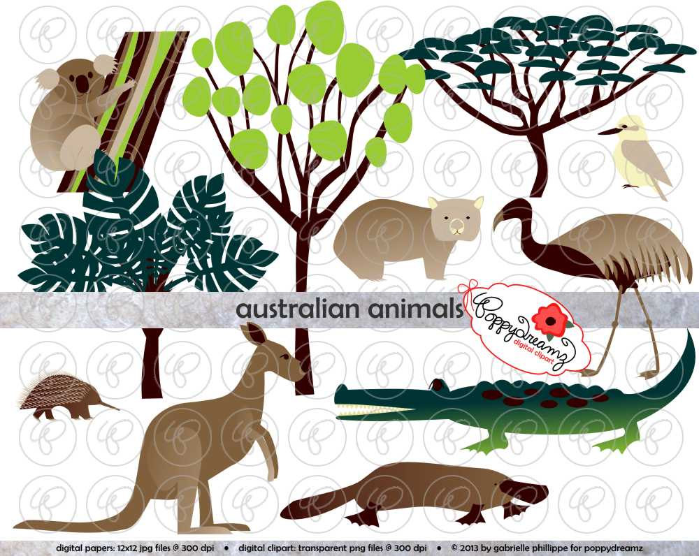 Wombat clipart australian possum Dpi) Platypus Etsy Australian Clipart