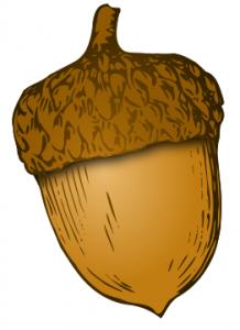 Acorn clipart Art Download Acorn Clip Acorn