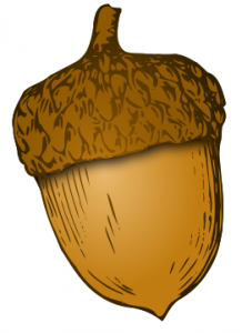 Seeds clipart seed germination Art Acorn Download Clip Acorn