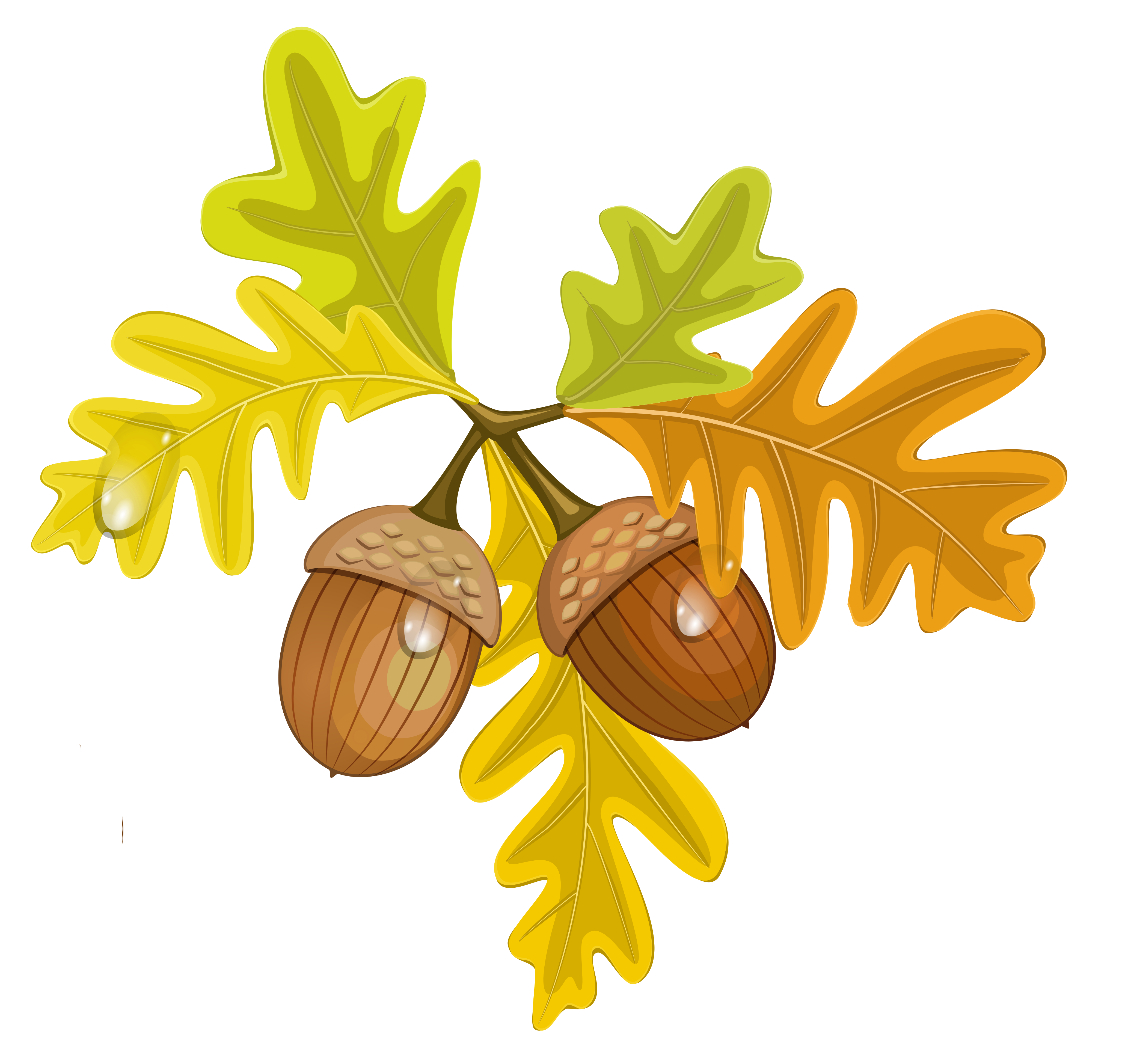 Acorn clipart yellow Clipart Boarder Clipart Boarder Acorns
