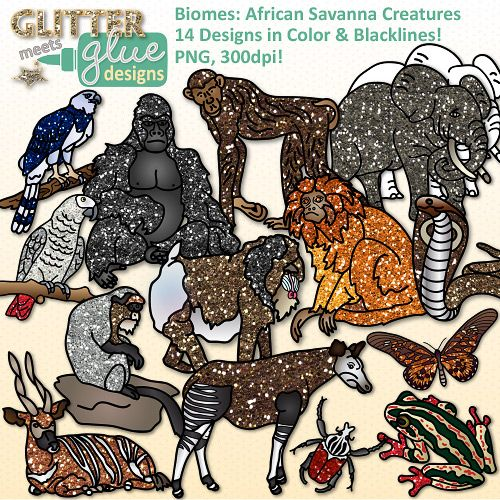 Africa clipart animal science & Rainforest 26 Animal Groups