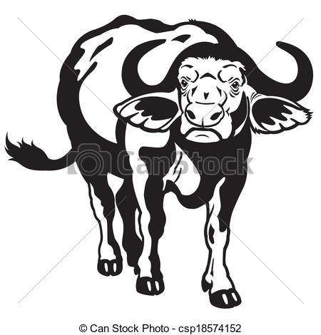 African Buffalo clipart White african of cape Clipart