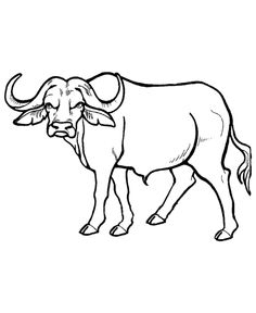 African Buffalo clipart coloring page Wild animal page page Lions