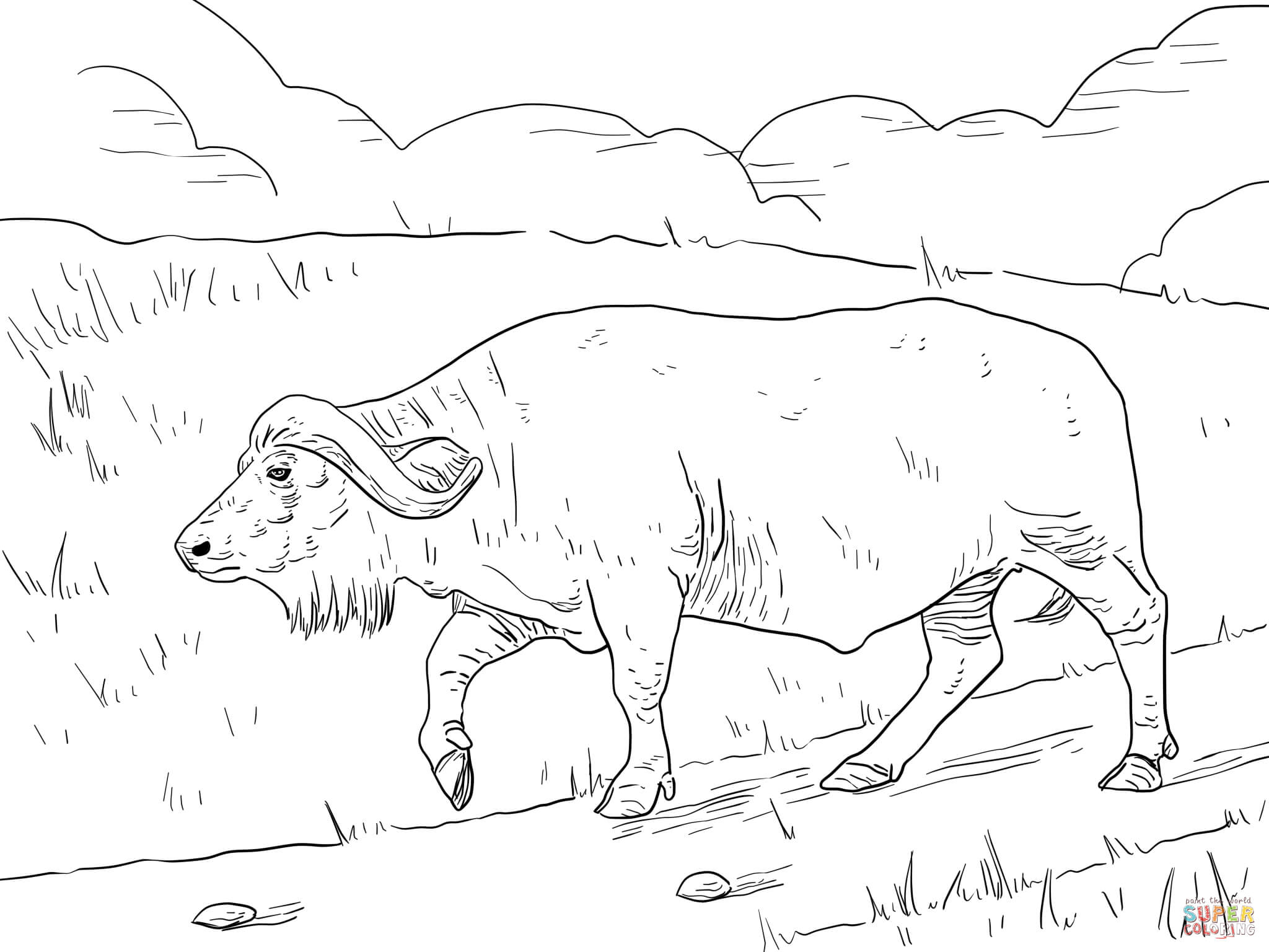 African Buffalo clipart coloring page Cape Buffalo coloring Pages Free