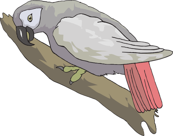 African Grey Parrot clipart wild Clip at  as: image