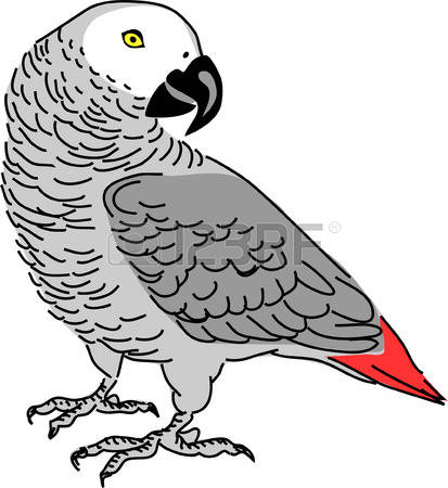 African Grey Parrot clipart #17 African clipart Download African