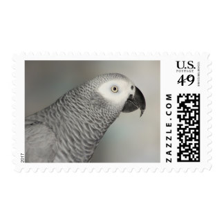 African Grey Parrot clipart Parrot Stately Grey Zazzle Grey