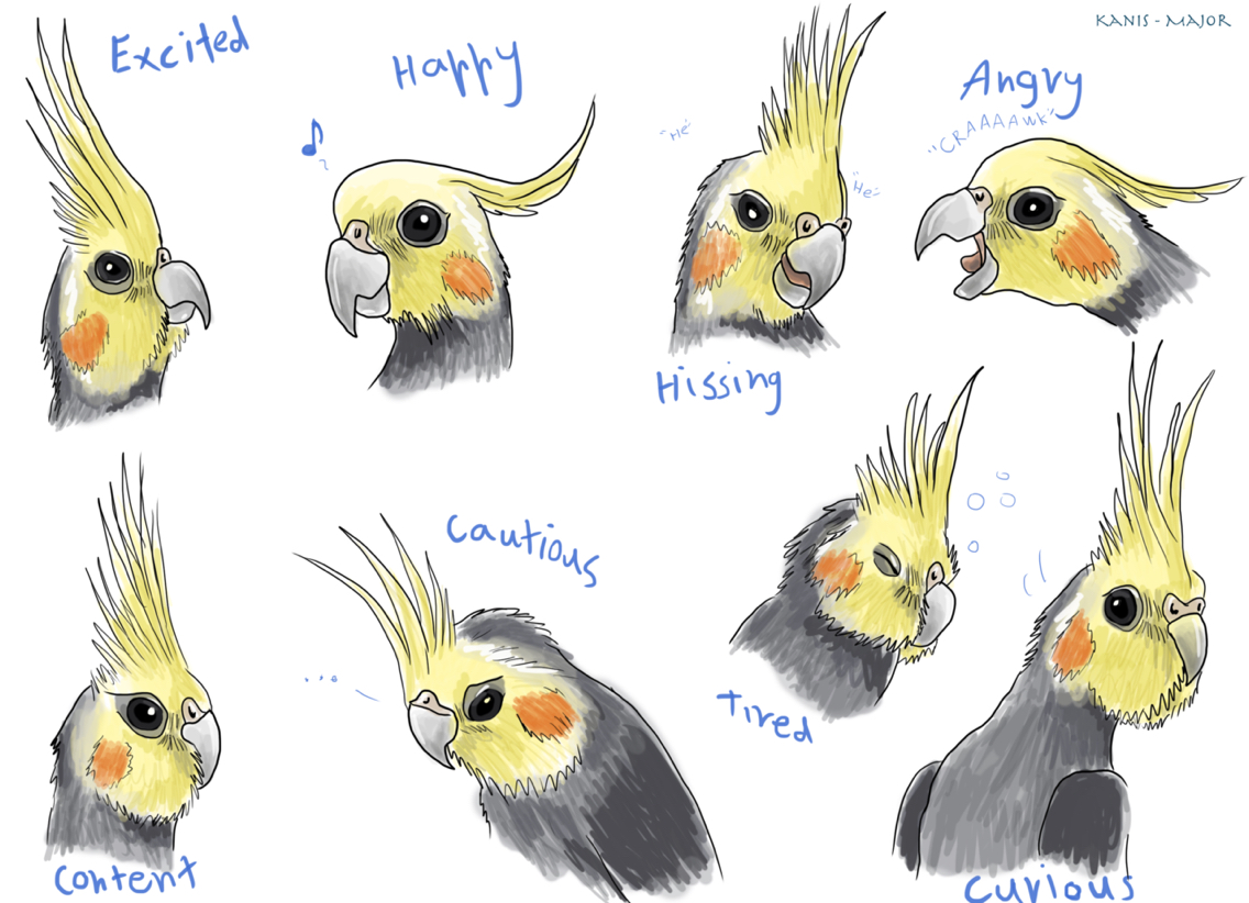 Animal Kingdom clipart animal care Of parrots The expressions a