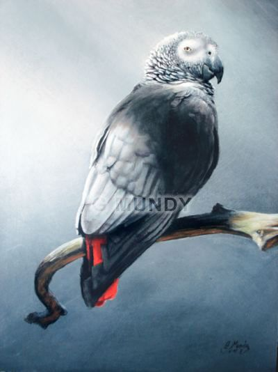 African Grey Parrot clipart deviantart By Pinterest best African on