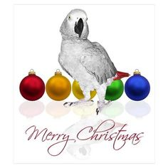 African Grey Parrot clipart Merry African Parrot by Grey
