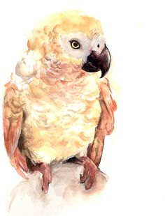 African Grey Parrot clipart deviantart On A4 African Topanga on