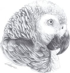African Grey Parrot clipart deviantart On tats of RazerBlade07 Search