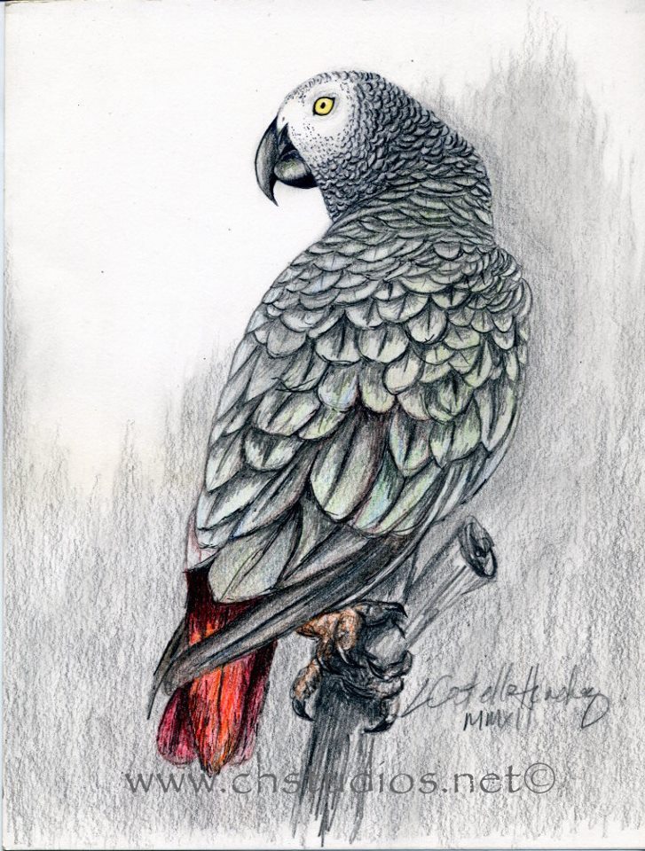 African Grey Parrot clipart i love you Kind love Pinterest · grey