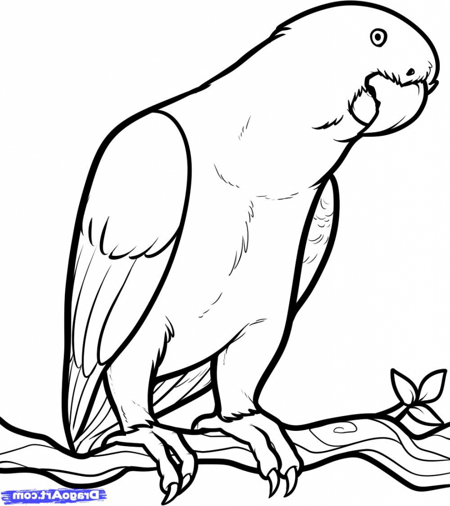 African Grey Parrot clipart simple Parrot Drawing Grey Draw African
