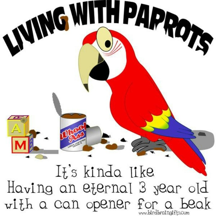 African Grey Parrot clipart wild My grey my on and