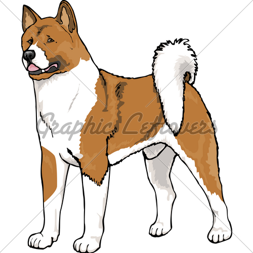 Akita clipart puppy Standard Male GL Images Stock