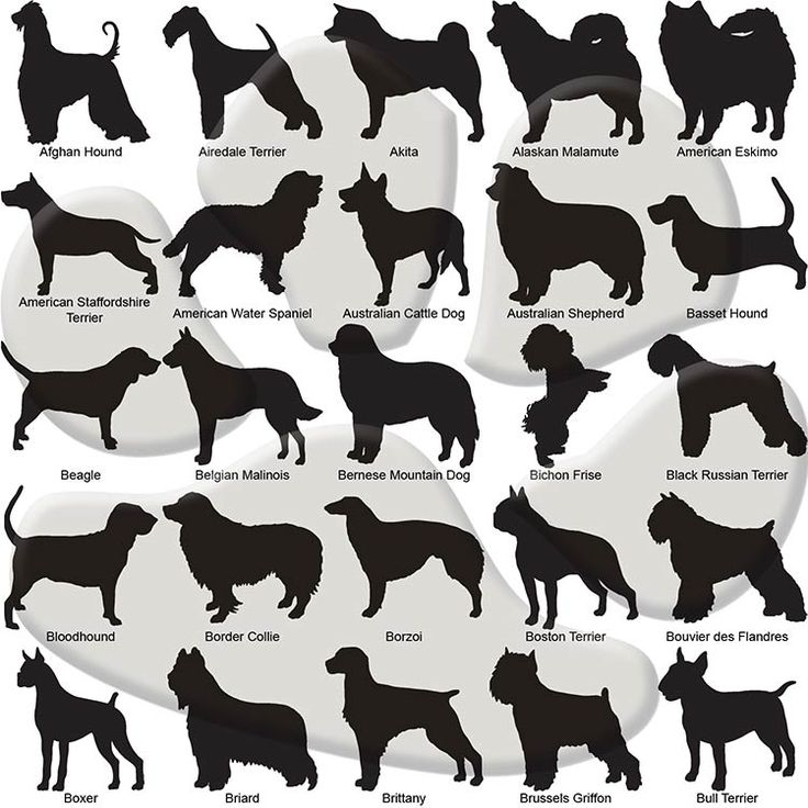 Akita clipart 25+ Dog dogIDs Best Breed