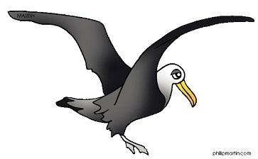 Albatross clipart orville Albatross Free Clipart Albatross