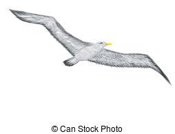 Albatross clipart Albatross clipart Graphics Art white