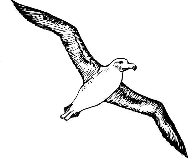 Albatross clipart Clip svg office clip in