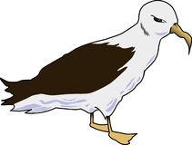 Albatross clipart Clipart drawings Albatross Download clipart