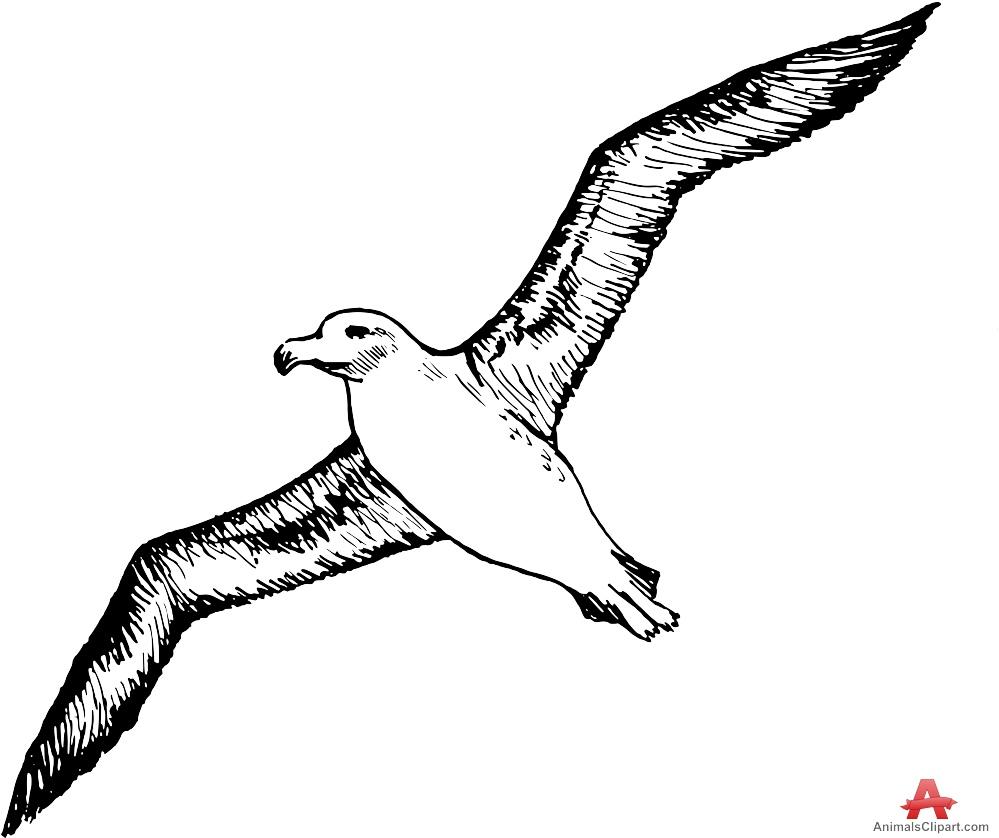 Brds clipart albatross Albatros clipart Albatross  Clipart