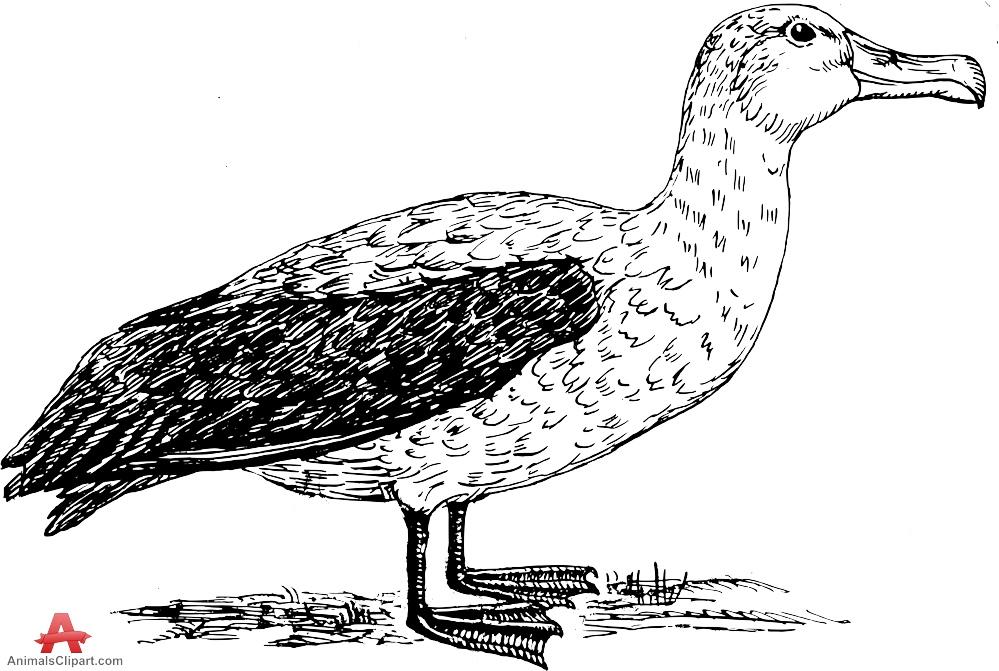 Brds clipart albatross AnimalsClipart Design com Sea by