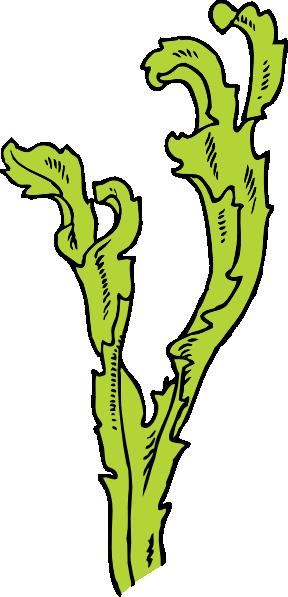 Algae clipart Online online public royalty &