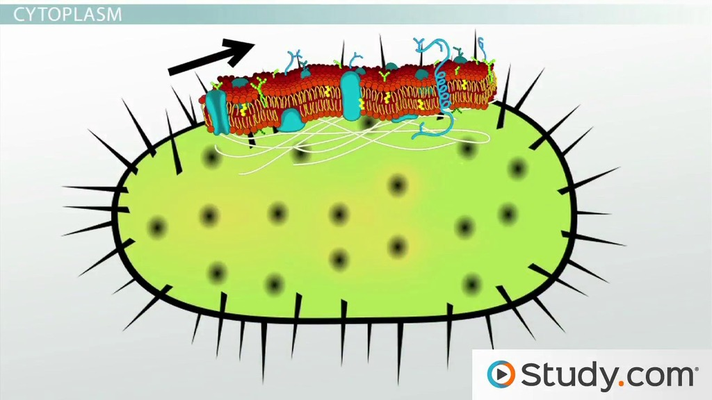 Structure clipart contents & Study Membrane: Bacterial Cytoplasm