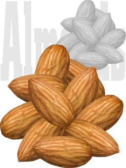Almond clipart nuts Clip art Almond / greeting