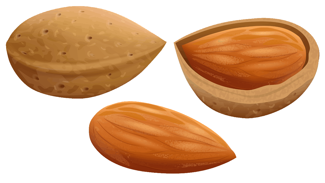 Almond clipart nut seed Clipart colorful almond image Clipart