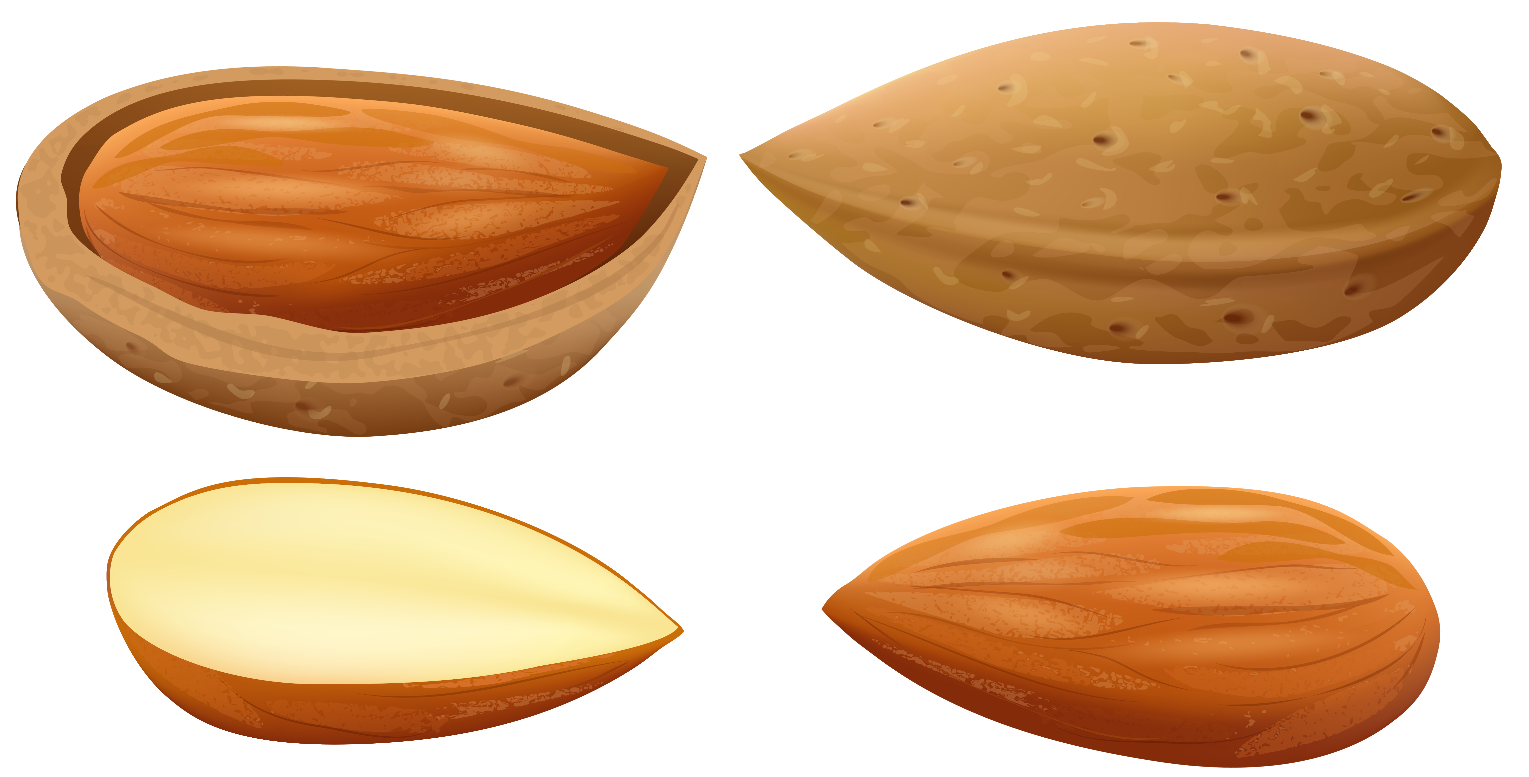 Almond clipart nut seed PNG Art Clip PNG Best