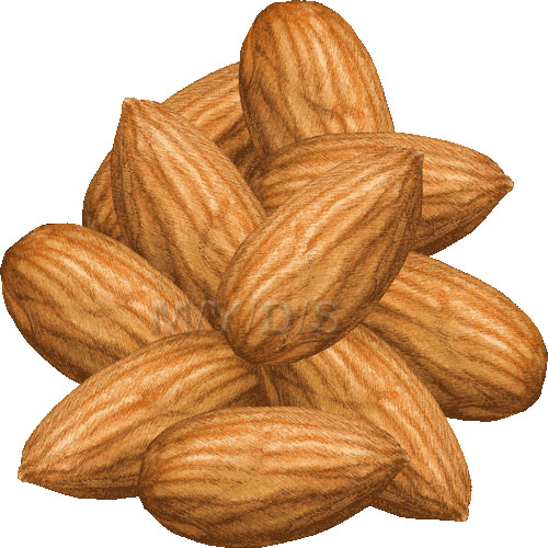 Almond clipart hazelnut Almond picture Almonds art /