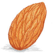 Hazelnut clipart Walnut Clipart GoGraph Royalty Almond Free Art