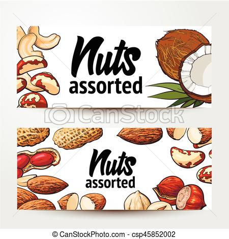 Hazelnut clipart Walnut Clipart Of Vector  cashew Brazil