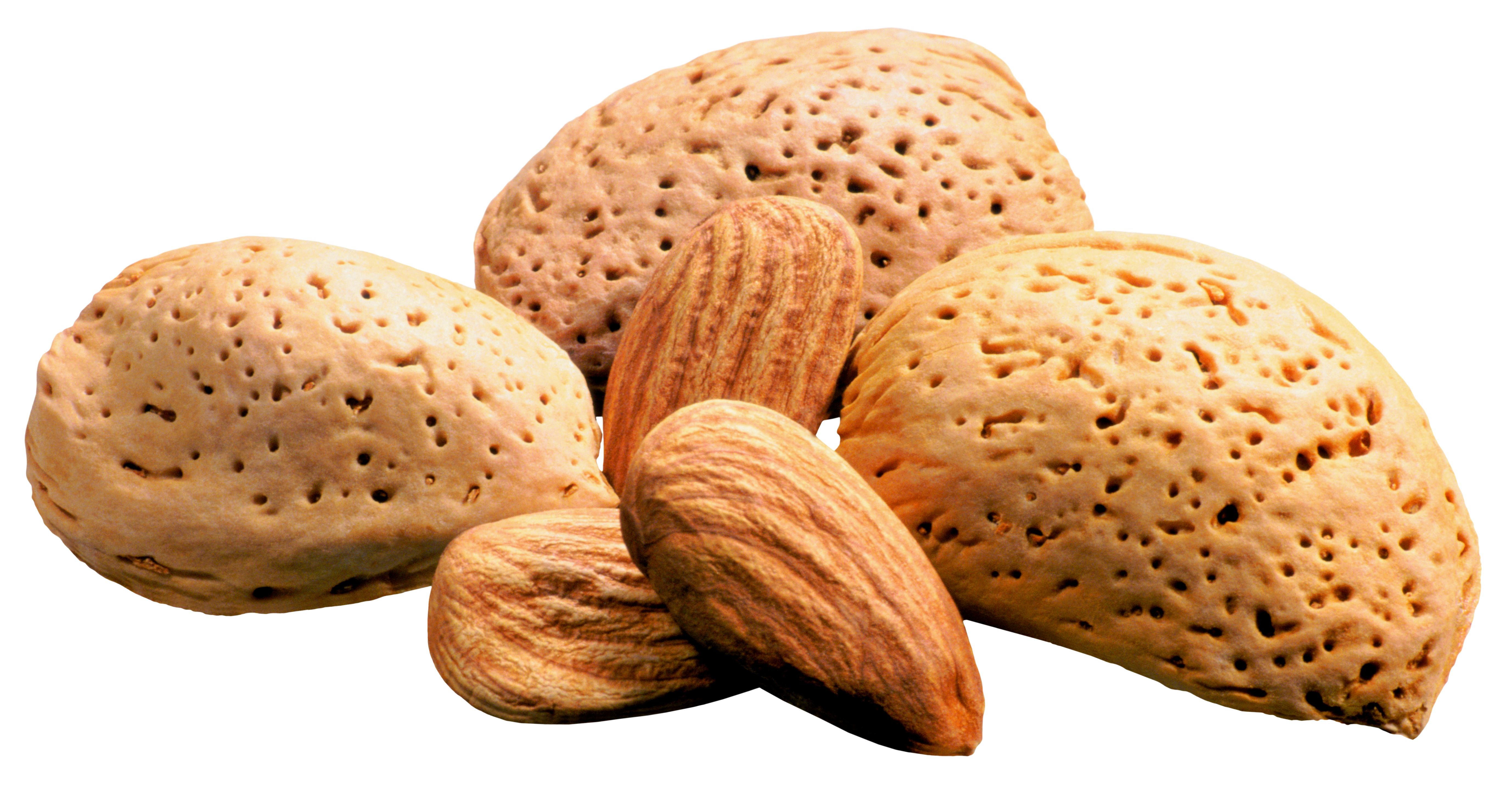 Almond clipart nuts Gallery Yopriceville Images ? PNG