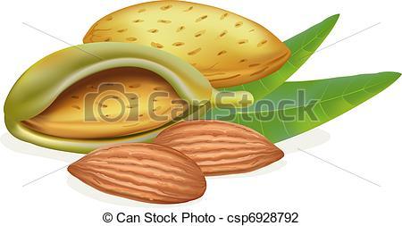 Almond clipart vector Illustration csp6928792 almonds Ripe of