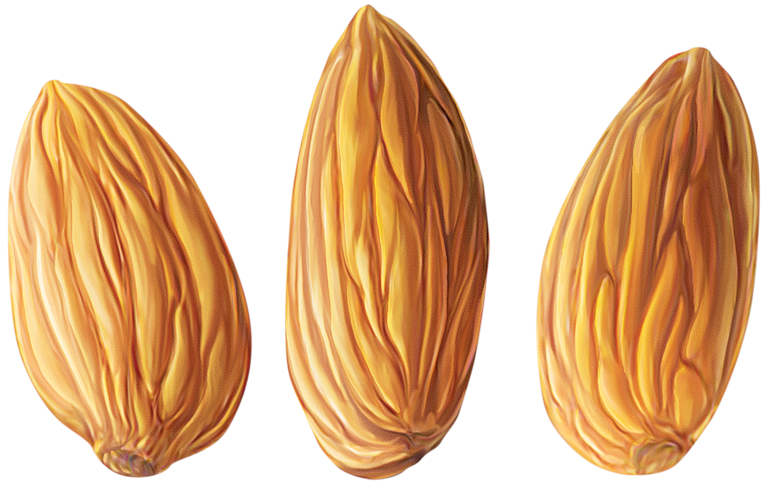 Almond clipart vector Nut #32801 Free #32799 png