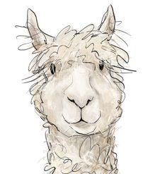 Alpaca clipart peruvian The Alpacas Alpaca Border illustration