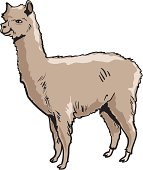 Alpaca clipart fur Vector Graphics lama Alpaca 2