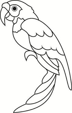 Amd clipart parrot Pictures  plástica tracing Pinterest
