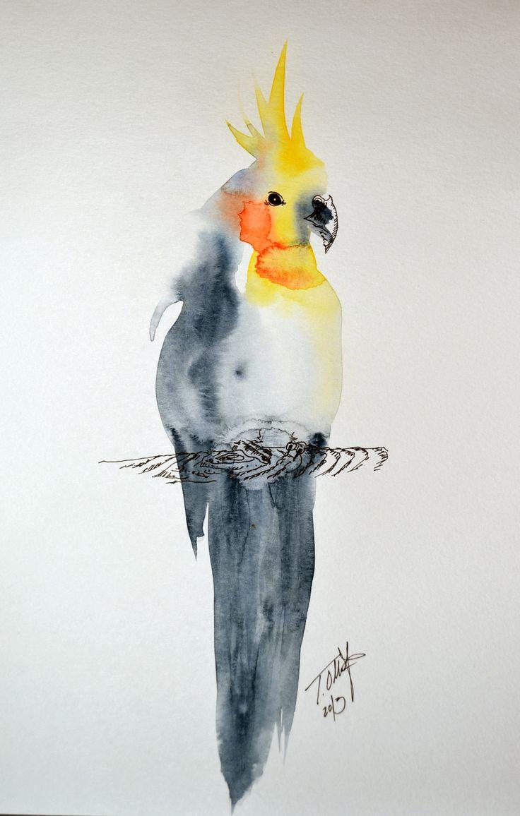 Amd clipart parrot Pinterest art  akvarel on