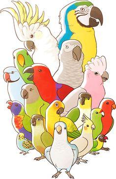 Amd clipart parrot Care Bird parrots Parrot Pinterest