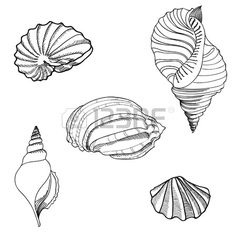 Amd clipart shell For Jan's Black and Seashell