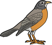 American Robin clipart #1 Download clipart American clipart