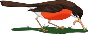 Robin clipart robin bird #12